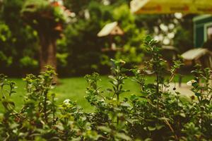 4 gode idéer til haven