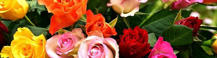 Roser er røde, violer er blå - planter du rosenbuske, ...