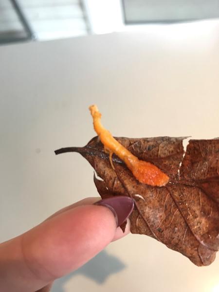 Hvad er dette? Giftig?