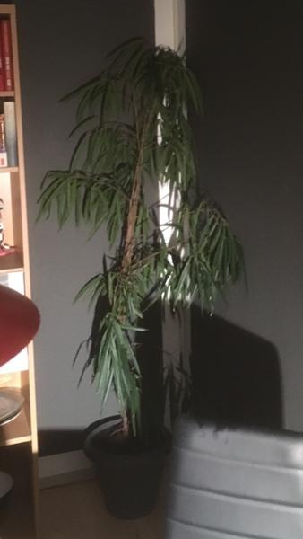 Hvilken plante