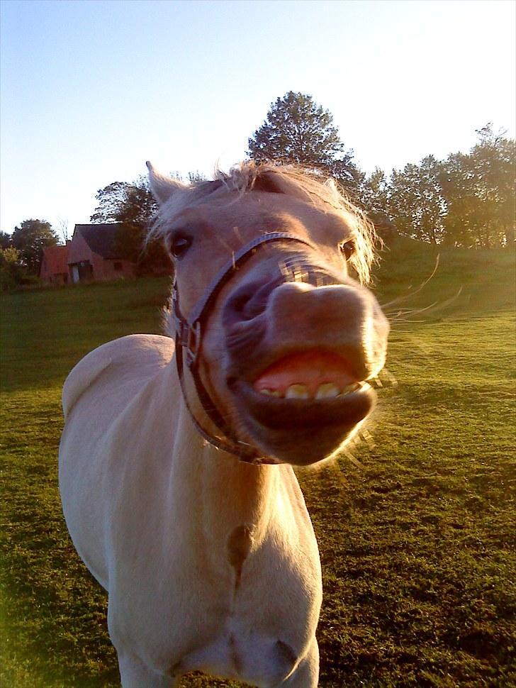 den hvide hest dating d
