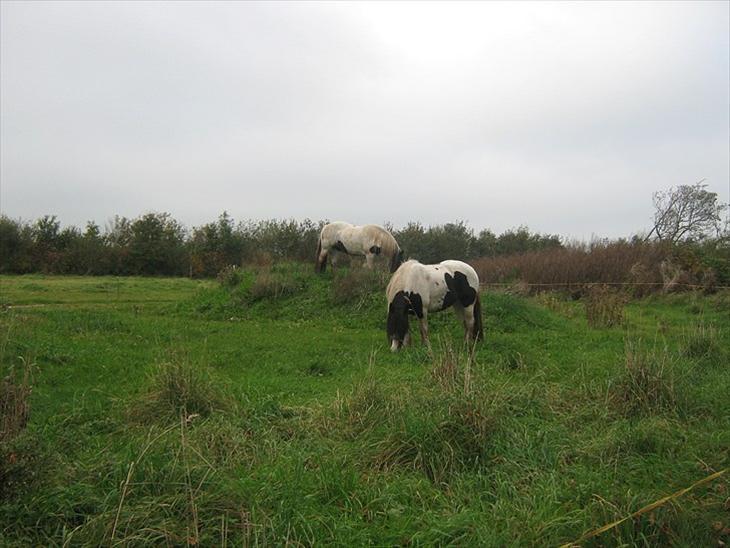 Brorsensgaards heste