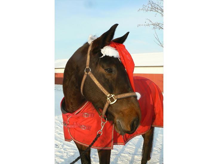 fotoalbum diverse hest julebilleder