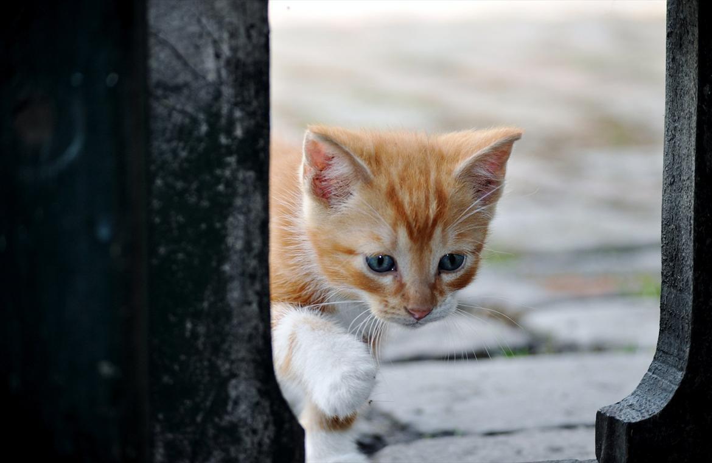 små katte