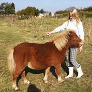 Emil - min tidligere passer pony <3