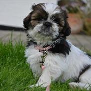 Min hund:)