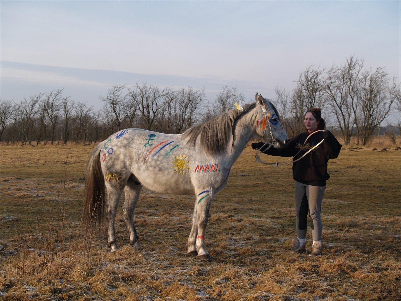 Muffa Som Indianer Hest Diverse Hest Uploadet Af Sascha Og