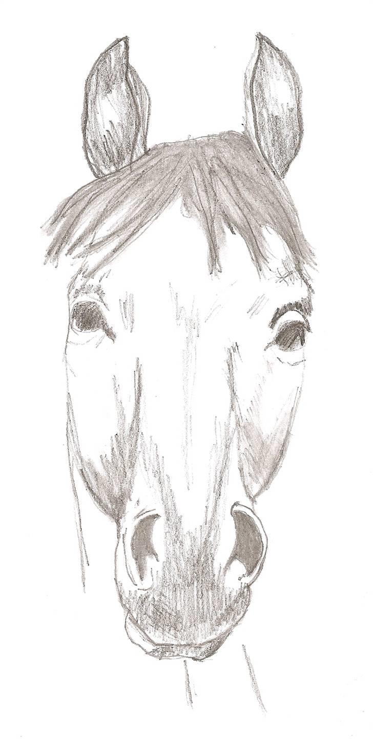 mine fine tegne heste
