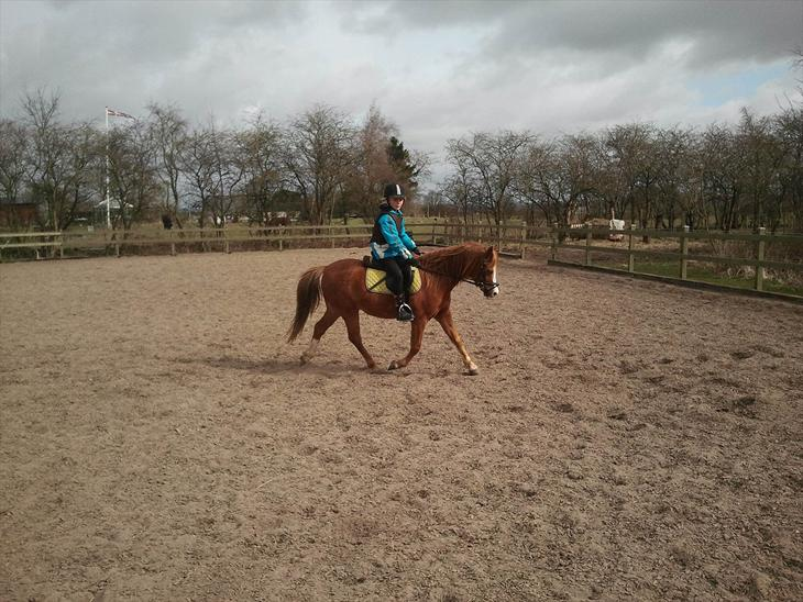 Dressur træning på Puskas den 1/4-12!! - Dressur pony<3