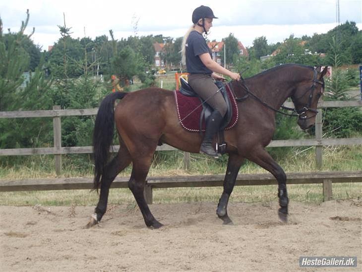 Gustav da han var baby hest :p