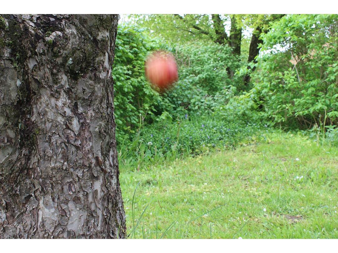 æblet falder ikke langt fra stammen