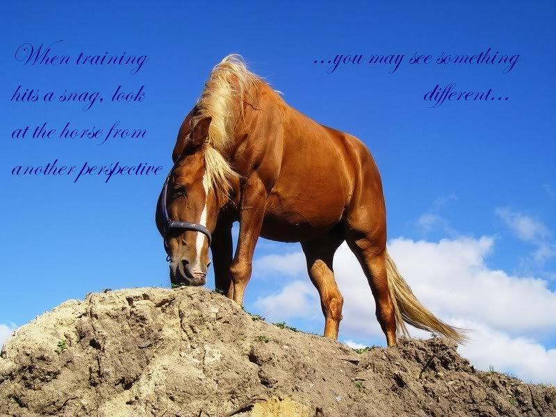 eskortside hest citater