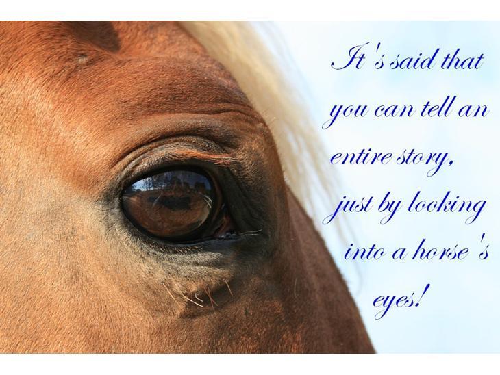 citater om heste sex med unge piger