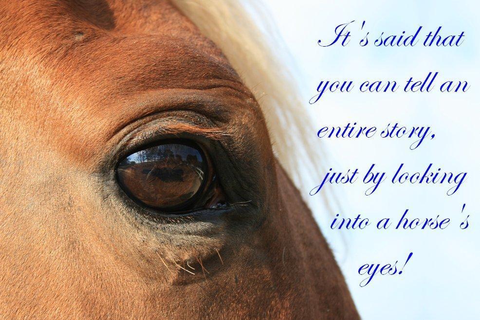 citater om heste