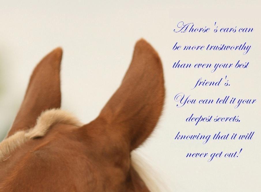 ældre damer og unge mænd citater om heste