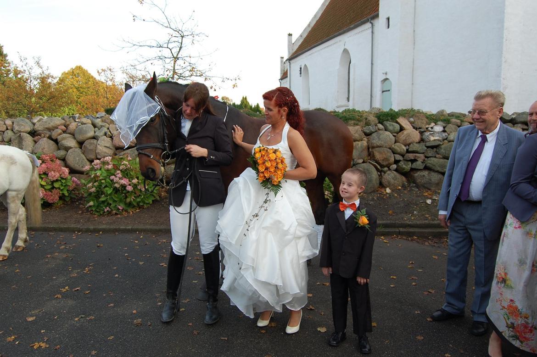 bb9871c608d8 mit bryllup den 20 oktober - Diverse hest - Fotos fra christina t