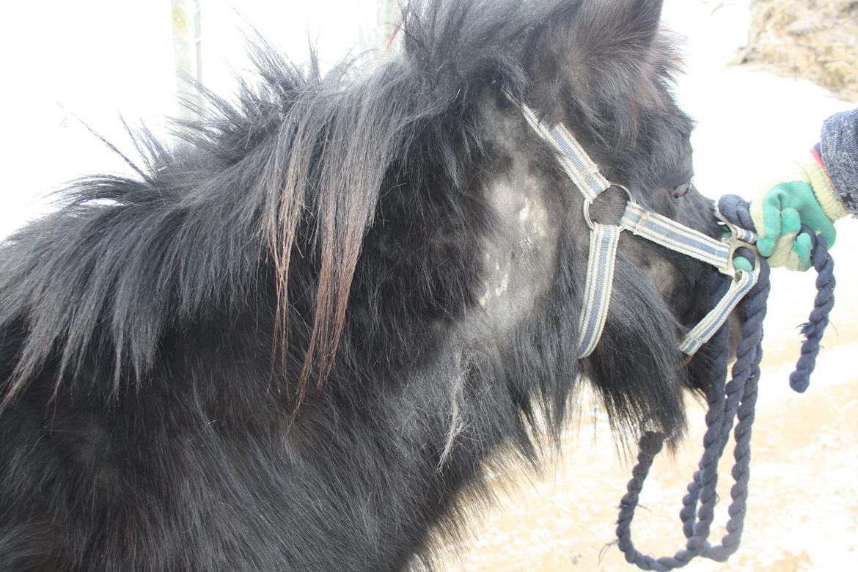 fra mini friser til puddelhund - Diverse hest - Fotos fra britta h