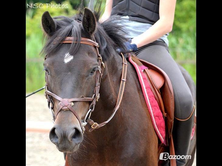 springhøjder hest