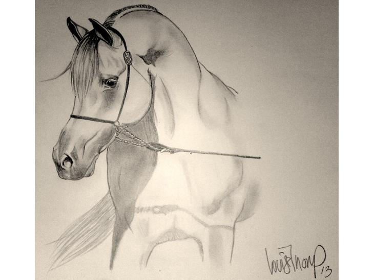 mine heste tegninger   tegninger   uploadet af louise t