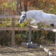 heste gennem tiden:)
