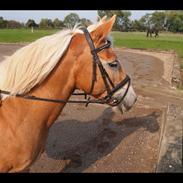 Fantastisk pony