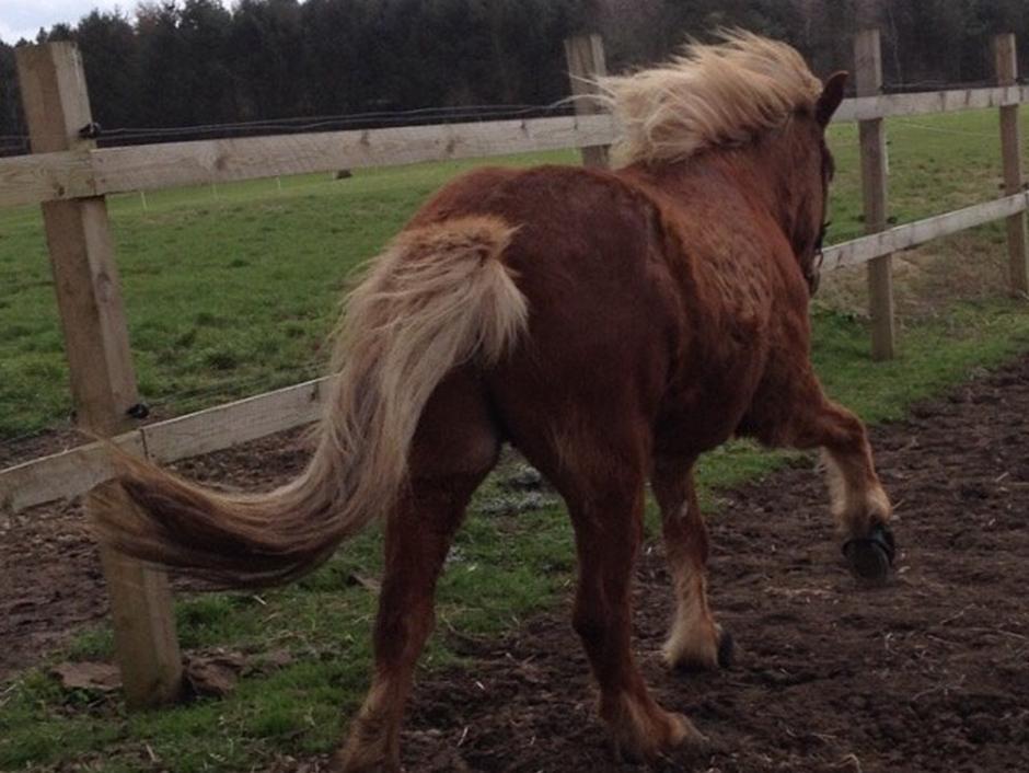 Min smukke hest