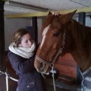 Mine minder med heste igennem tiderne <3