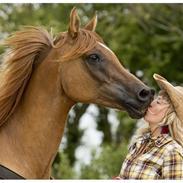 De 5 bedst bedømte heste på HG