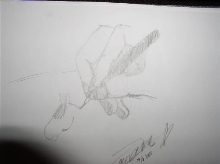 mine tegninger dyr   tegninger   fotos fra zandra h