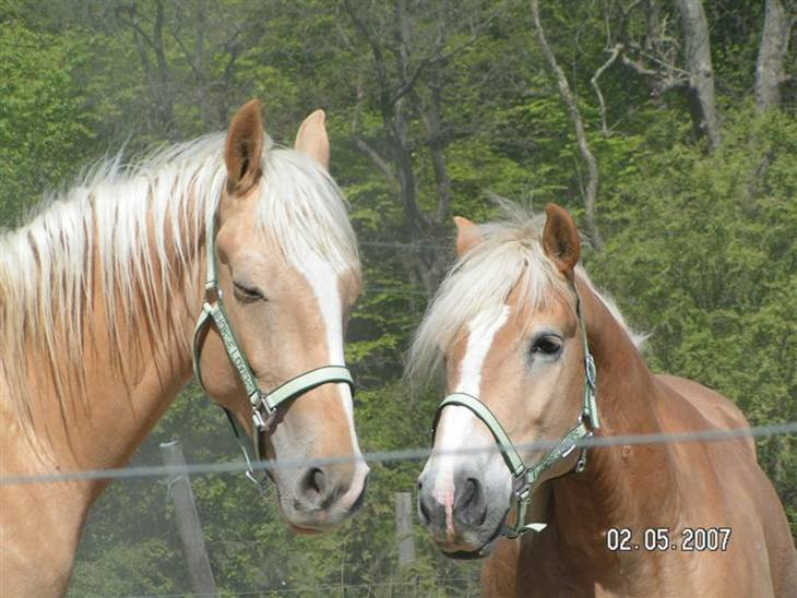 hestens venner