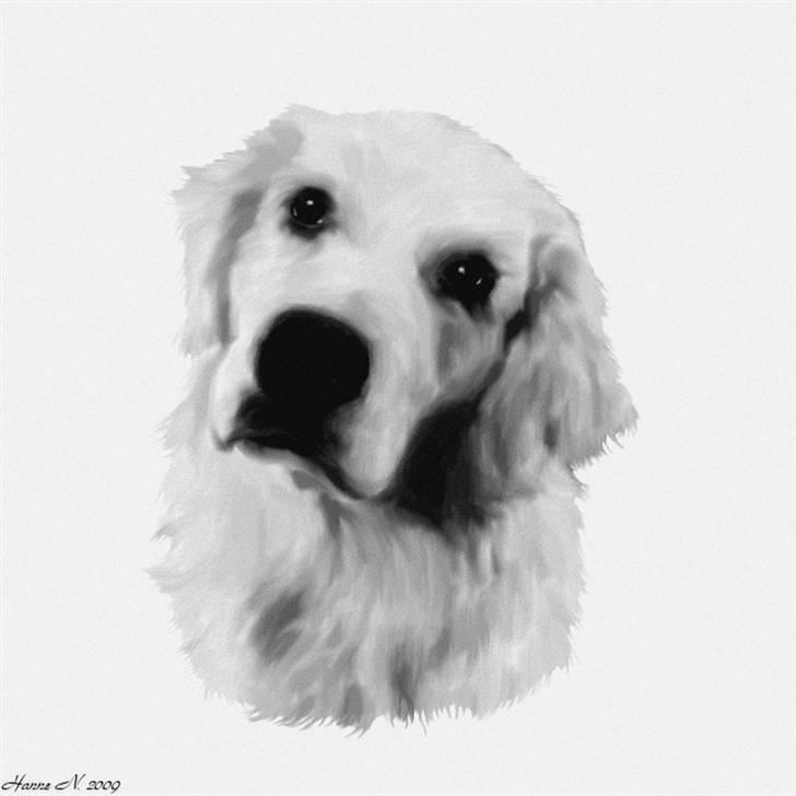 tegninger af dyr pictures to pin on pinterest