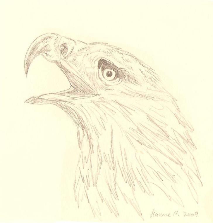 tegninger af dyr   tegninger   fotos fra hanne n