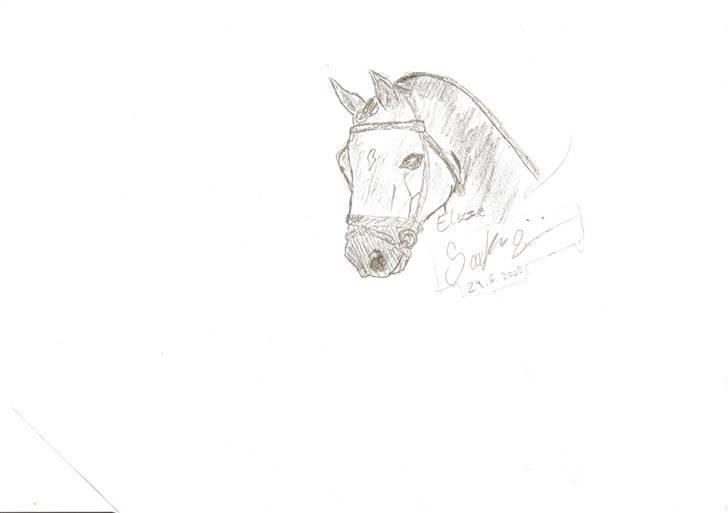 mine tegninger af forskellige heste   tegninger   fotos