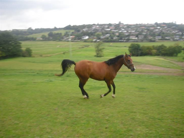 Sommerbilleder Af Kalle Og De Nye Venner Diverse Hest Fotos Fra