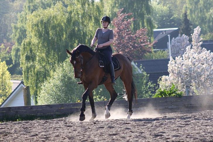 Balancetræning hest