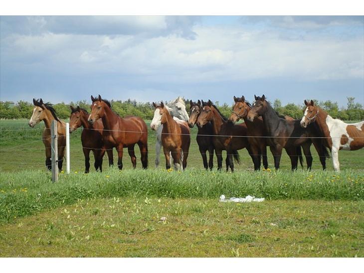 Blandet billeder af ponyer/heste