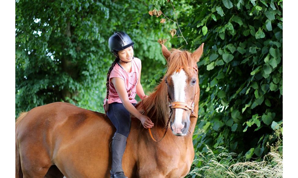 grundtræning af hest fra jorden
