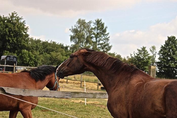 mustang heste mærker