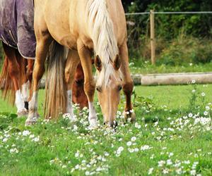 Foderskift - hesten ind fra græs