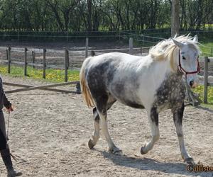 """Hvordan træner man en """"dominerende"""" hest?"""
