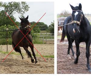 Undgå at dyrke flugtinstinktet i din træning af hesten