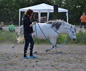 Træn din hest - i stedet for at begrænse dig!