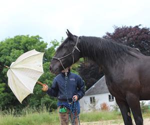 Siger du JA eller NEJ til din hest?