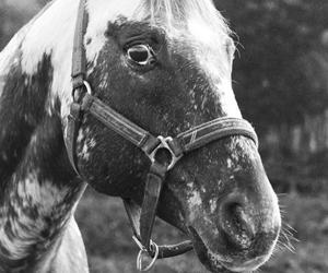 Når hesten er bange for egne skygge