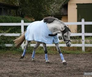 Den dominerende hest er usikker