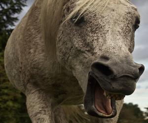 Hestens kropssprog