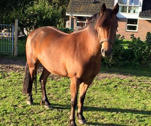 Gode råd til køb af hest og pony