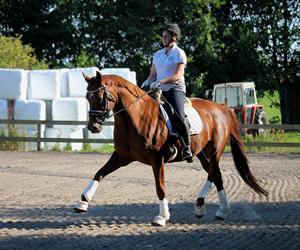 At træne heste..