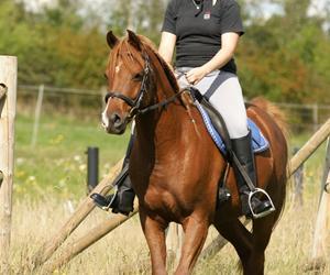 At få en hest der er let på tøjlen