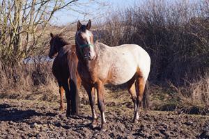 Skal hestesporten kun være for de kendte racer?